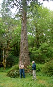 Vancouver Island > Ronning Garden > Ron Moe e una sequoia