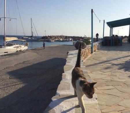 Donousa: il porto