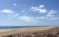 Gorriones: Playa de Sotavento de Jandia